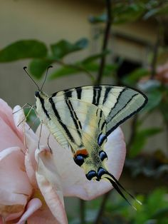 """""""A butterfly lights beside us, like a sunbeam and for a moment its glory and beauty belong to the world but then it flies on again and though we wish it could have stayed, we feel so lucky to have seen it"""""""