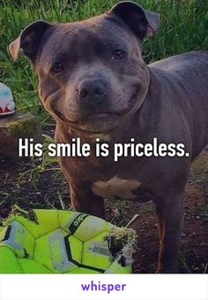 His smile is priceless. more smiling pitbull, funny pitbull, dogs Cute Puppies, Cute Dogs, Dogs And Puppies, Doggies, Animals And Pets, Funny Animals, Cute Animals, Pitbull Terrier, Terrier Mix