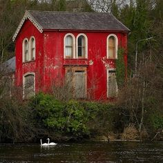 Wouldn't you love to live in this bright red home with a pair of swans, no less?