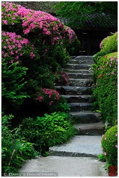 Stairs between blooming rhododendron bushes, Shisen-do temple