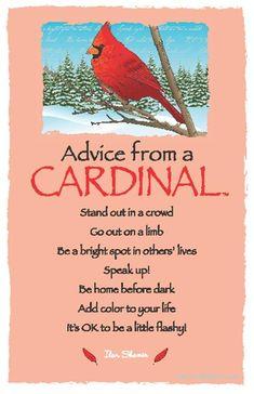 ☆ Advice From a Cardinal ~:By Ilan Shamir ☆