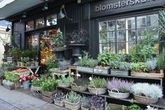 A kooky guide to Copenhagen Fun Snacks For Kids, Dinners For Kids, Shop House Plans, Store Windows, Garden Shop, Cabinet Decor, Shop Front Design, Shop Window Displays, Shop Interior Design