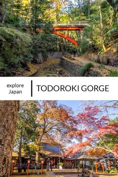 Get into nature and escape tourist trail in central Tokyo at Todoroki gorge.  #TodorokiGorge #Tokyo #Japan