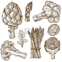 engraving food: vector set of engraving illustration green vegetables on white background