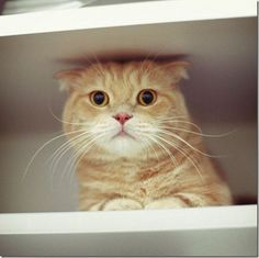 cute #love #animal #funny #cat share cute things at www.sharecute.com