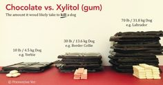 Xylitol is toxic to pets. Hypoglycemia, Liver Failure, and Death may occur. #pets #PawsOFFXylitol