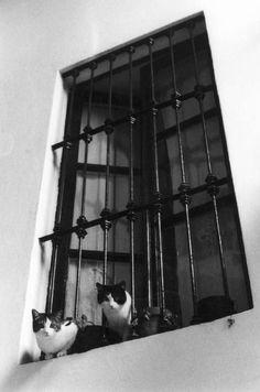 Ferdinando Scianna Carmona, Spagna: gatti alla finestra. 1986