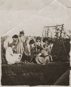 "A group of young Jewish women, members of the Hanoar Hatzioni Zionist youth movement, picking vegetables on the ""Farma."" [Photograph #23993]"