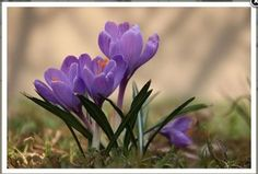 Ćwiczenia z przyrody. Źródło: http://www.superbelfrzy.edu.pl