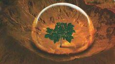 """Assistiu ao filme """"Perdido em Marte""""? Cientistas estão testando simular o plantio de batatas peruanas em solos parecidos com os marcianos - como fez Matt Damon."""