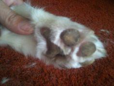 How to Groom a Siberian Husky