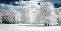 Анимация: Морозное утро из категории Новогодние и Рождественские открытки