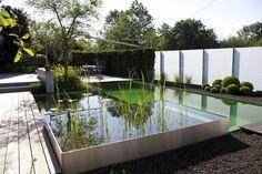 Balena Pools: moderner Pool von Teichmeister