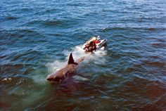 Titan Books is known for their attractive, film-savvy titles, which is why it's exciting news that the publisher has released an expanded second edition of Jaws: Memories from Martha's Vineyard . Jaws Movie, Jaws Film, Plunge Pool, Classic Monsters, Great White Shark, Shark Week, Scene Photo, Classic Films, Good Movies