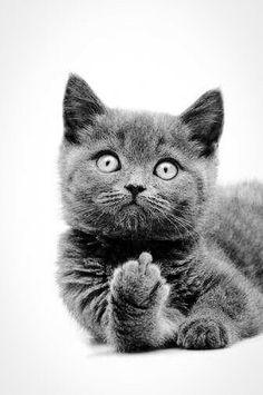 die 8 besten bilder von lustige katzenbilder funny animals funny cat pictures und humorous