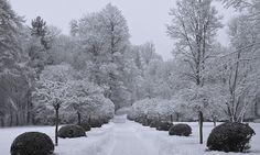 File:Fresh Snow in the garden of Ambras Castle. Q Garden, Garden Trees, Snow Castle, Tree Surgeons, Christmas 24, Garden Maintenance, Let It Snow, Winter Garden, Landscape Design