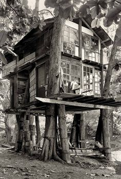 In the late 1960s, a rag-tag group started to camp out on the beach in Kauai, and over the next several years, built a community of treehouses known as Taylor Camp.