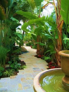 Beautiful backyard walkway with Heliconias, Banana Plants, Bird of Paradise, and lush tropical landscape! The water fountain on the pathway brings the beauty to life! I miss my Banana Trees! Tropical Garden Design, Backyard Garden Design, Tropical Landscaping, Landscaping Ideas, Tropical Gardens, Garden Landscaping, Tropical Plants, Landscaping Melbourne, Backyard Designs
