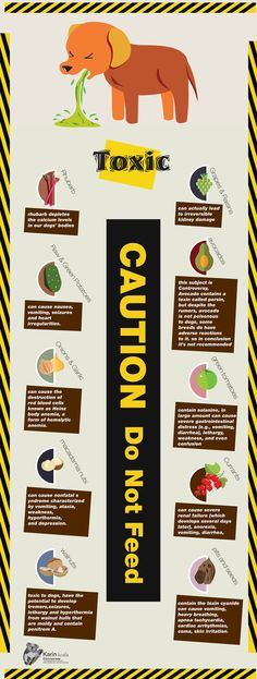 Dog food Infographic -Toxic Most people don't know but dogs are omnivores and not carnivores. I'm a huge dog lover so I took the time and made this extremely detailed and extend Infographic on the topic that shows which fruit and vegetable is good for your dog and  which are toxic. Those are the toxic fruits and vegetable and you should keep your dog away from them.