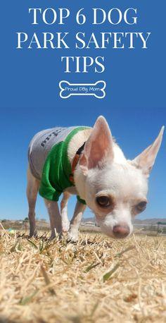 Top 6 Dog Park Safety Tips | Dog Care Tips | Dog Safety Tips |