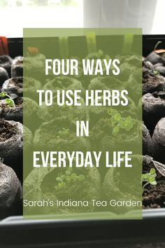 Herbs are fun to grow, but even better to use. There are so many ways we can use herbs in our everyday life. We can make them into herbal teas, use herbs in cooking, make medicinal herb products, and make different herbal crafts to enjoy day after day. Indoor herbs | Outdoor Herbs | Growing herbs indoors | Growing herbs outdoors | Growing herbal tea | Medicinal Herbs | How to use herbs | How to dry herbs | How to preserve herbs Preserve Herbs, Growing Herbs Indoors, Indoor Herbs, Herbal Teas, Tea Blends, Medicinal Herbs, Drying Herbs, Gardening For Beginners, Garden Tips