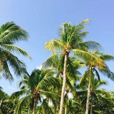 23 Beach Resorts in Batangas for Your Next Weekend Getaway Quick Weekend Getaways, Weekend Trips, Philippines Destinations, Best Happy Hour, Batangas, Siargao, Clean Beach, Farm Photo, Beach Photos