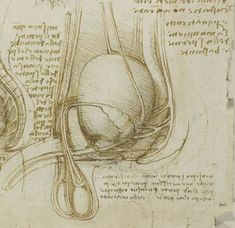 Leonardo da Vinci and the origin of semen | Notes and Records: the ... Royal Collection Trust, High Renaissance, Royal Society, Anatomy Drawing, Notes, Ink, History, Interesting Drawings, Windsor