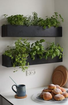 ▷ wonderful ideas on how to decorate your kitchen - kitchen decoration-black-green-flower pots-pflnazen-cup-plate-biscuit-wanddeko -