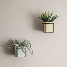Wall Mounted Plant Holder geo-fleur.com, plant with pot, light grey