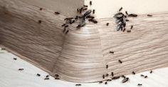 anti fourmi r pulsif naturel efficace truc pinterest anti fourmis fourmis et truc. Black Bedroom Furniture Sets. Home Design Ideas