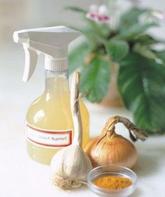 Make Your Own Homemade Pest Spray - Keep slugs and aphids away from window boxes with a homemade, nonchemical pest spray. Place one peeled onion, two peeled garlic cloves, and one teaspoon cayenne pepper in the jar of a blender. Add three cups of water, and blend until smooth. Let the mixture sit overnight, strain the liquid into a spray bottle, and coat plants generously. The solution will keep, refrigerated in the bottle, for up to one week.