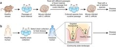 Restoration of the gut microbial habitat as a disease therapy - Development of therapeutic sets of bacteria.