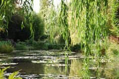 Photo by Shay Davidson of Monet's garden in Giverny where Monet painted the famous Water Lillies.