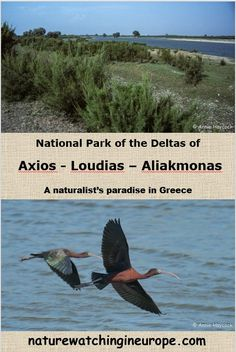 The Axios Delta National Park – Nature-watching in Europe Europe Travel Outfits, Europe Travel Guide, Wildlife Tourism, Slow Travel, Nature Reserve, Greece Travel, Cool Places To Visit, Travel Photos, National Parks