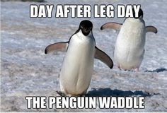 The Penguin Waddle Pictures, Photos, and Images for Facebook, Tumblr ...