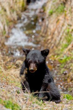 Black bear cub by Timothy Owens / 500px