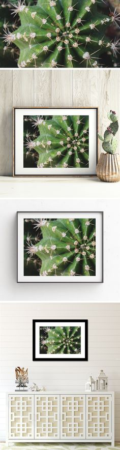 Cactus Art Print by april bern photography - This cactus photograph features the intricate symmetry of its spines and beautiful and calming green hues. This desert photo is the perfect accent for Southwest home decor, and the perfect gift for the Southwest art, desert art and cacti art lover.