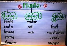 Good way to open a discussion on plants-What ideas do you have about what plants need? How about what they give us?