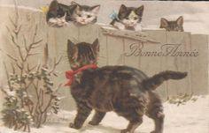 Chromolitho card little kittens & cat HELENA MAGUIRE
