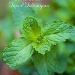 Fabulous Fresh Herbs, a Few Tips & Tricks