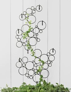 Vertical Gardens Wall trellis hangs on house exterior - Add vertical interest with metal trellises to complete your garden or patio design. Trellises can also be made from wood but metal garden trellises are Read