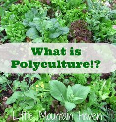 What is Polyculture?!