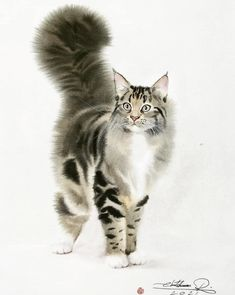 Watercolor Cat, Watercolor Artists, Watercolor Animals, Animal Sketches, Art Drawings Sketches, Animal Drawings, Surrealism Painting, Wildlife Paintings, Maine Coon Cats