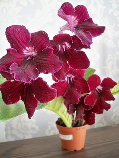 Victorian Valentines, Container Gardening, Flower Power, Orchids, African, Gardens, Beautiful Flowers, Bonito, Places