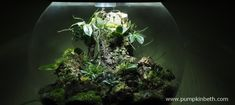 The Madagascar BiOrbAir Terrarium (part thirteen) - Pumpkin Beth Miniature Orchids, Bottle Garden, Terrarium Plants, Madagascar, Indoor Plants, House Plants, Beautiful Homes, Gardens, Pumpkin