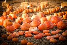 Pumpkin Patch, great activities for kids, and all sorts of autumn fun all month long at Flower Farm Inn. Pumpkin People, Flower Farm, Autumn, Fall, Activities For Kids, Celebrations, Things To Do, Things To Make, Fall Season