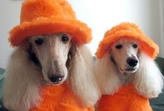 We are not twins we are just wearing the same clothes looking good in orange