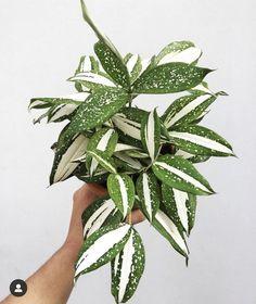 Inside Plants, Cool Plants, House Plants Decor, Plant Decor, Indoor Garden, Garden Plants, All About Plants, Interior Plants, Outdoor Plants