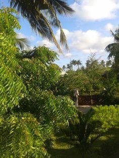 #Secluded setting #Zanzibar