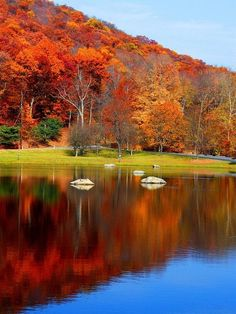 Find and save beautiful fall foliage from around the world and travel through romantic fall hikes under autumn leaves. Inspirations to share some fall pumpkin pie and apple cider fireside with friends. Beautiful World, Beautiful Places, Beautiful Pictures, Beautiful Flowers, Autumn Scenes, Fall Pictures, Nature Pictures, Belle Photo, Amazing Nature